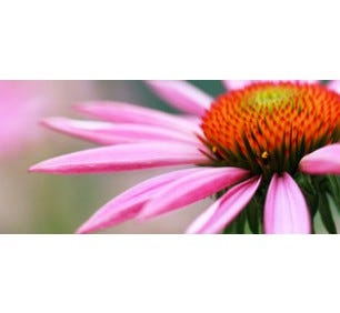 The Benefits of Echinacea Goldenseal Complex